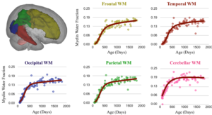 Trajectories of neurodevelopment from differing brain regions. These plots show the rapid development that the brain undergoes during the first years but also highlights that different brain regions have different developmental patterns and develop at different times.